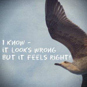 Möwe-it feels right_what_am_i_here_for