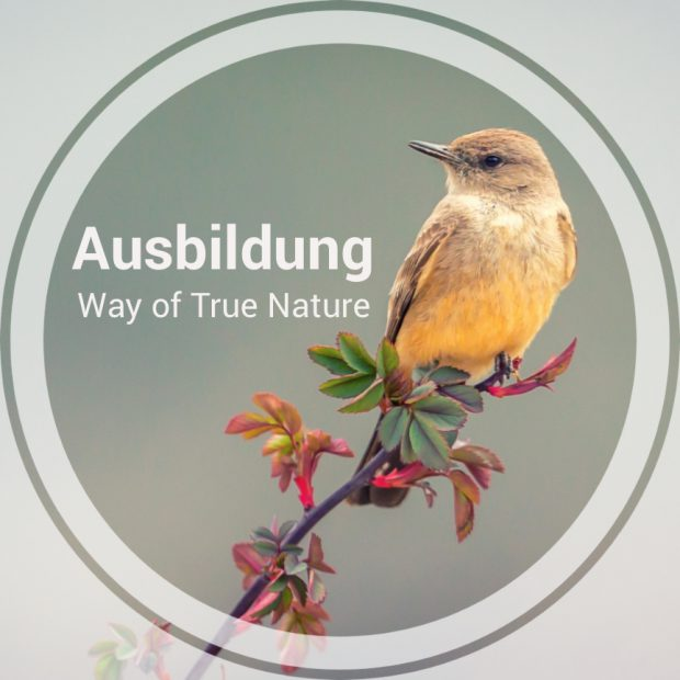 Ausbildung_Way_of_true_Nature