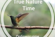 TRue_Nature_Time_Online